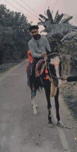Guru bhai horse